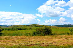 Plain with grains in the harvesting time. In summer days. Green landscape Royalty Free Stock Photos