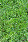 Plain Grass Stock Image