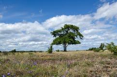 Plain grassland summer view Royalty Free Stock Photo