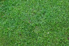 Plain green grass texture top view stock image