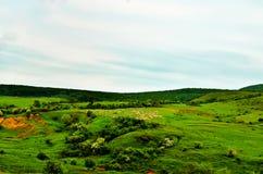 Plain. Green paradise in the plain stock photos