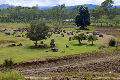 Plain of Jars Stock Image