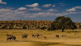 Plain in Kgalagadi Stock Photo