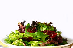 Plain Mixed Salad on a Plate Royalty Free Stock Images