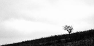 Plain and simple landscape photograph showing a sloping land with one small tree on the side. A simple black and white landscape comprising of a grassland Stock Image