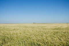 The plain in Spain Royalty Free Stock Photography