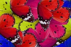 Plain Tiger Butterfly (Danaus chrysippus) Stock Photos