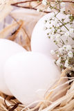 Plain undecorated Easter eggs in a nest Stock Photo
