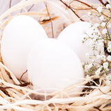 Plain undecorated Easter eggs in a nest Stock Photography