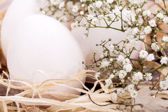Plain undecorated Easter eggs in a nest Royalty Free Stock Photo