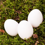 Plain undecorated Easter eggs in a nest Stock Images