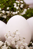 Plain undecorated Easter eggs in a nest Royalty Free Stock Images