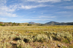Plain in Yellowstone. National Park Royalty Free Stock Photography