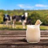 Plain yogurt, cows Stock Image