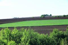 Plaine Bulgarie de Danube Photos stock