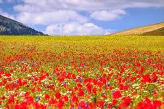 Plaine fleurie images libres de droits