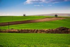 Plaine verte Images libres de droits