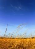 Plaines africaines Photographie stock libre de droits