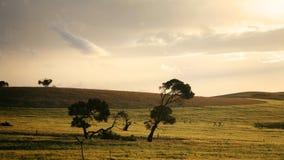 Plaines d'Australie du sud Photographie stock libre de droits