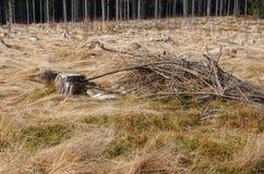 Plaines d'hiver Photo stock