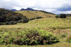 Plaines de Horton image stock