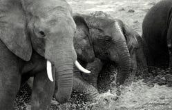plaing大象的泥 免版税库存图片