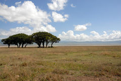 The plains of Africa Royalty Free Stock Images