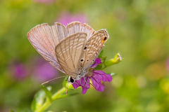 The Plains Cupid Stock Photo