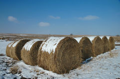 Plains Hay Rolls Royalty Free Stock Image