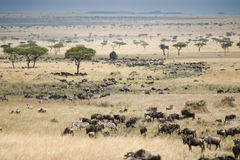 Plains of the Masai Mara in Kenya Stock Images