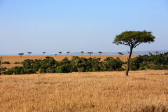 Plains Masai Mara reserve Kenya Africa Royalty Free Stock Photos