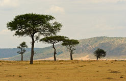 plains of the masai reserve in kenya africa Royalty Free Stock Image