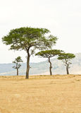 Plains of the Masai reserve in Kenya, Africa Stock Photography