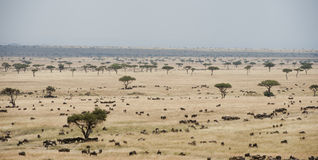 Plains in the Masia Mara, Kenya Royalty Free Stock Images