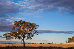 Plains near Canberra, Australia Capital Territory Royalty Free Stock Images