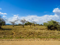 The plains of Serengeti. National Park stock image