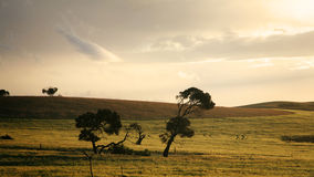 Plains of South Australia Royalty Free Stock Photography