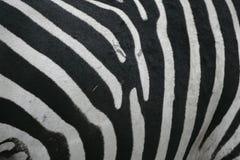 Plains zebra, Equus quaggai. Close up of skin pattern, Tanzania Stock Image