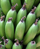 Plaintains on the Tree. Green plaintains growing on a tree in Mexico Stock Photos