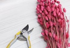 Plainted in roze droog aartjesinstallatie boeket en het prunning scheert hulpmiddel leggend op witte houten achtergrond florist stock afbeeldingen