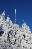 Plaisanté avec des arbres en hiver Photos libres de droits