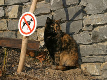 Plaisanterie - un chat, aucuns crabots Photos libres de droits