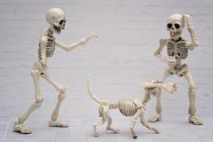 Plaisanteries squelettiques Photos libres de droits