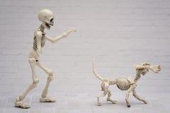 Plaisanteries squelettiques Images libres de droits