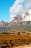 Plaisir de Merle wine farm. Vineyard on Pleisir de Merle wine farm in autumn. Shot in the early afternoon in South Africa with mountains and bright blue sky in Royalty Free Stock Images