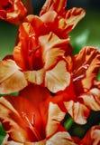 Plaisir orange HDR photographie stock