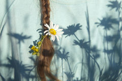 Plait with daisy Royalty Free Stock Image