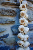Plait of white garlic heads hanging on the stone wall Royalty Free Stock Image
