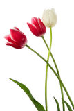 Plaited flowers Stock Photo