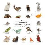Plakat von Haustieren auf französisch Stockfotos
